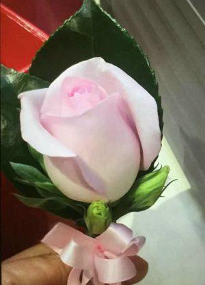 1朵浅粉红色玫瑰胸花