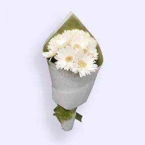 11枝白色太阳花