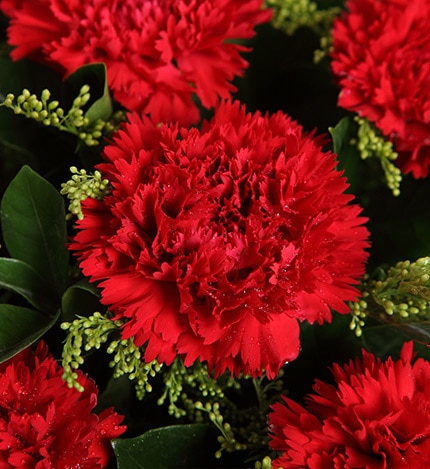 11 Stems Red Carnation with Yellow Minor Flower