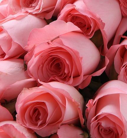 19 Stems Pink Rose with Dark Purple Statice