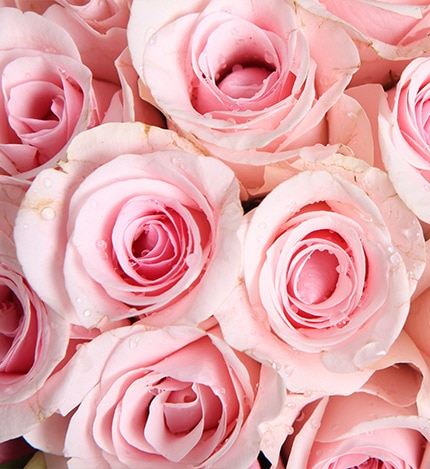 19 Stems Pink Rose with Pink Lisianthus