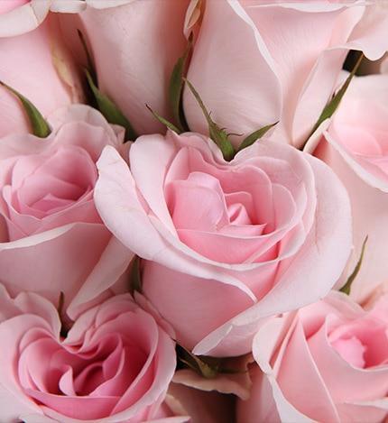 29 Stems Pink Rose