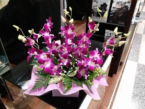5 Stems Singapo Orchid / Fleelings