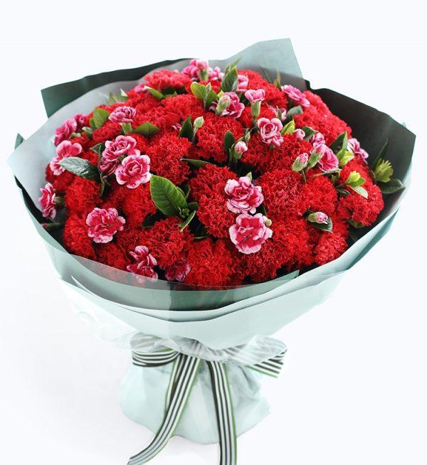 66枝红色康乃馨加15枝白边紫色多头康乃馨配叶子/幸福万年长