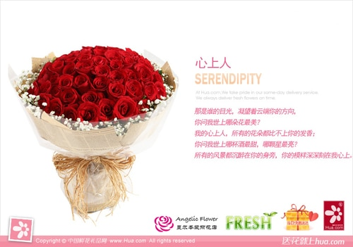66 Stems Red Rose with Babysbreath