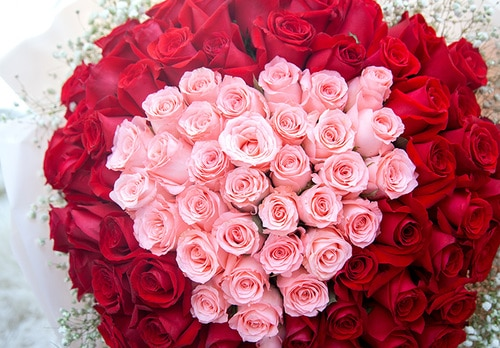 99 Stems (33 Stems Pink Rose & 66 Stems Red Rose) with Babysbreath