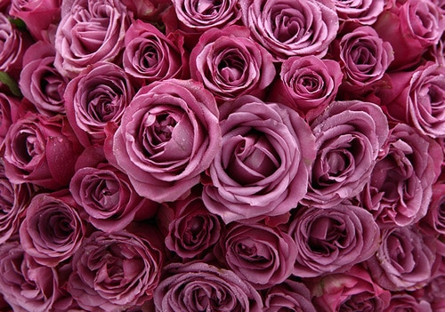 99 Stems Purple Rose