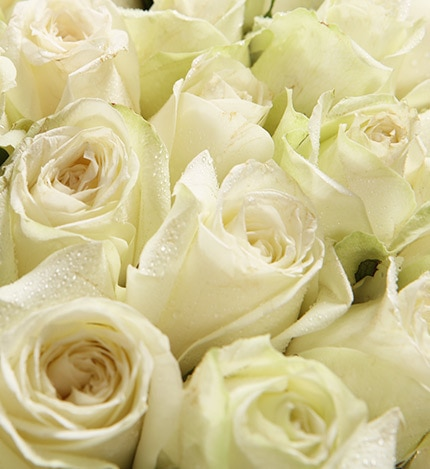 99 Stems White Rose with Leaves